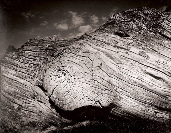 TREE TRUNK, Hafod Fields, Ceredigion 1996 - THE WELSH LANDSCAPE