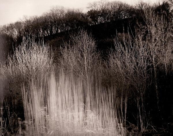 TREES IN SUNLIGHT, Glan-y-Avon, Aberystwyth, Ceredigion 2004 - THE WELSH LANDSCAPE