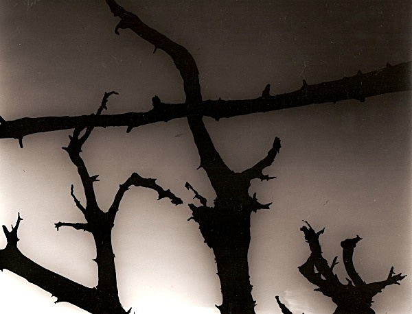 DEAD TREE ROOTS, Cefn Coch, Cwmystwyth, Ceredigion 2003 - THE WELSH LANDSCAPE