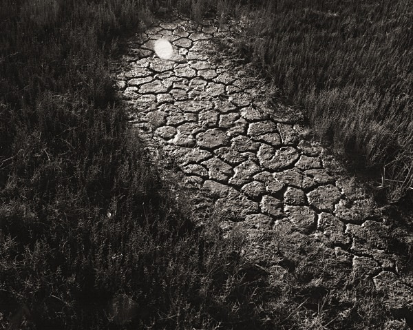 YNYS LAS, Ceredigion 2014 - THE WELSH LANDSCAPE