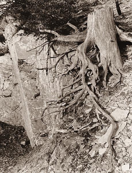 HAFOD, Ceredigion 1993 - THE WELSH LANDSCAPE