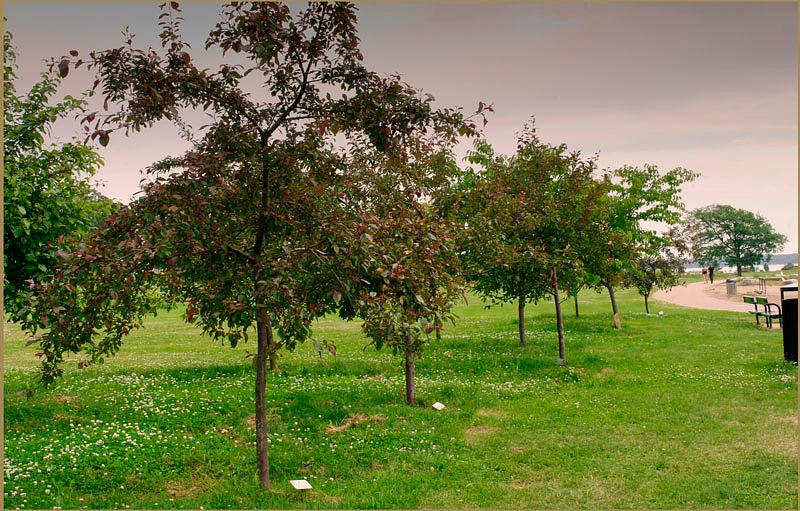 Kotka Katariinan Meripuisto 5 - Parks and Gardens
