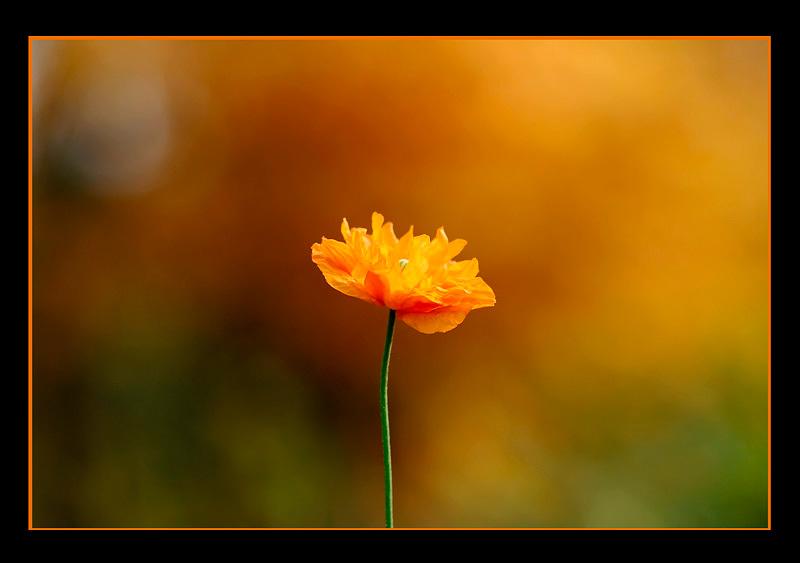 Still Life in Orange - Still Life