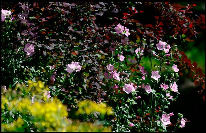 Linnea's Garden 7 - Parks and Gardens