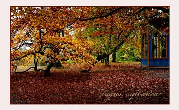 Bergianska V - Parks and Gardens