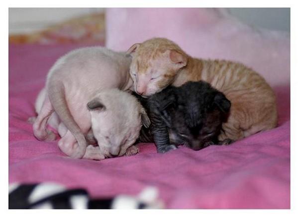 10 days - Linssi's kittens