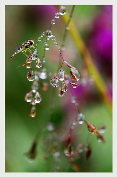 15 - The Secret Garden