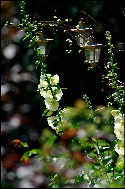 Linnea's Garden 5 - Parks and Gardens