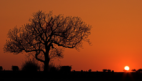Goodnight Tree - Rest Of Yorkshire