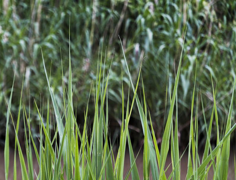 Grass Points - Worcester Birmingham Canal