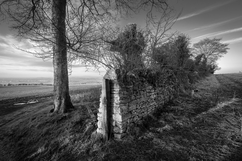Day 5 - Tree and Wall - On Bredon Hill - 2016