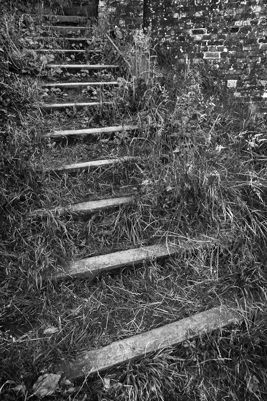 Grassy Steps - Worcester Birmingham Canal