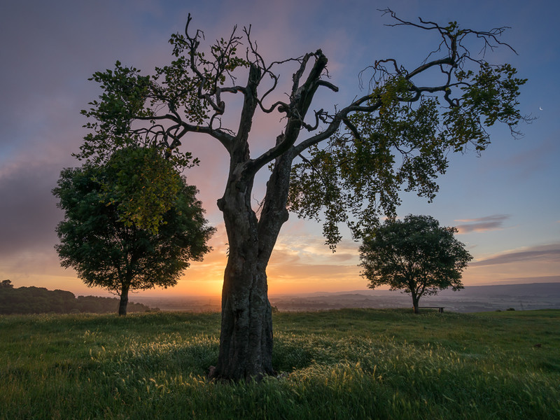 Day 31 - Three Tree Sunrise - On Bredon Hill - 2016