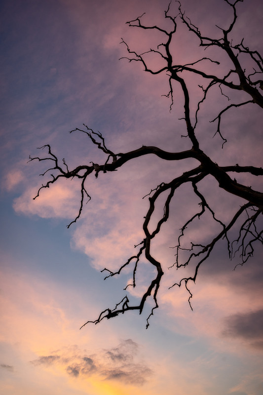 Day 25 - Dawn Branches - On Bredon Hill - 2016