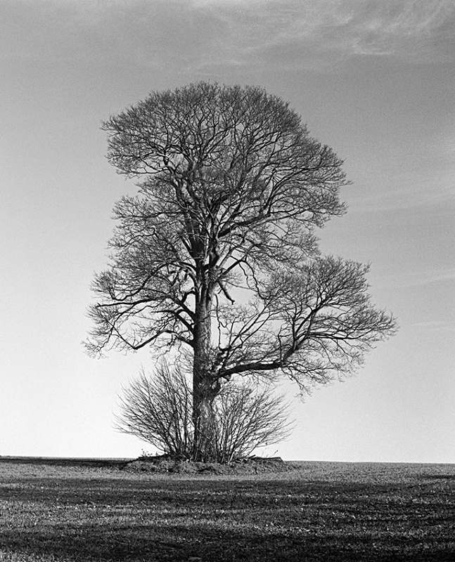 0078 - Lone Oak - Trees & Plants