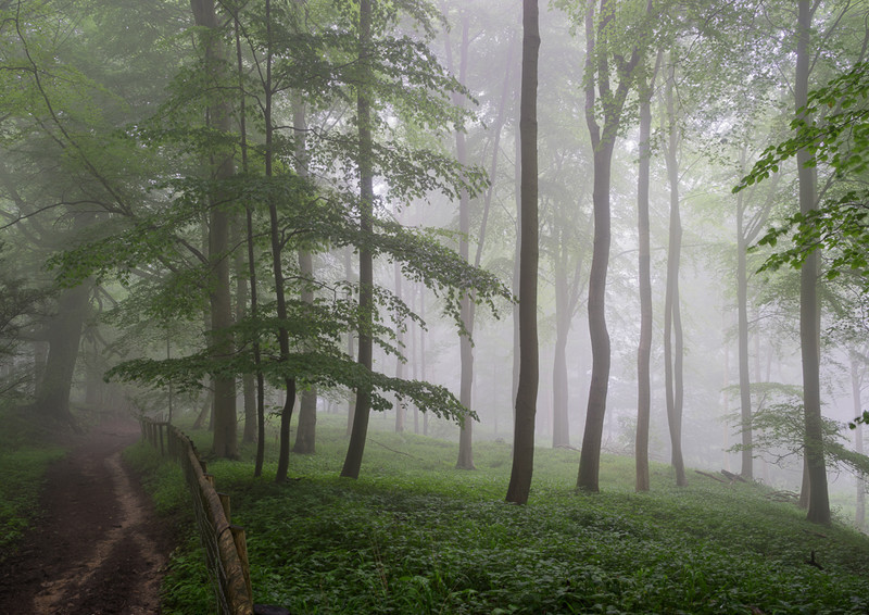 Day 28 - Misty Beeches - On Bredon Hill - 2016