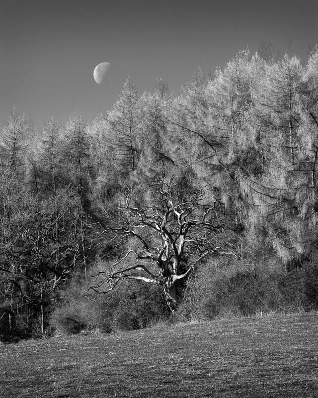 Day 16 - Moon - Last Quarter - On Bredon Hill - 2016