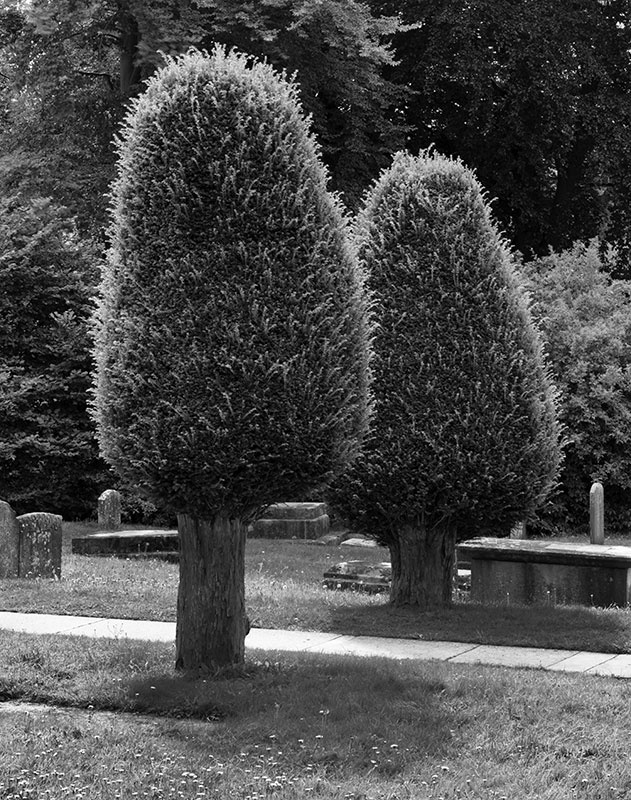 2180 - Painswick - Hairy Yew Pair - The Cotswold Way - 2009