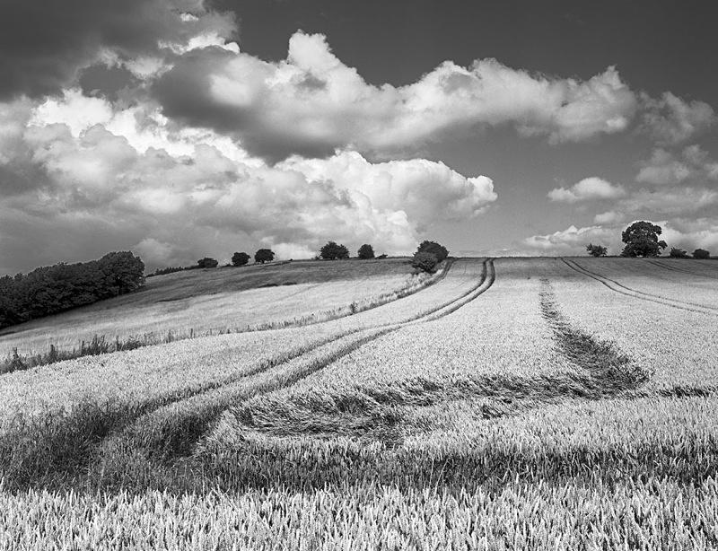 2168 - Wistley Hill Wheatfield - The Cotswold Way - 2009