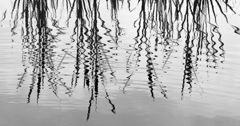 Ripple Reeds - Images from England