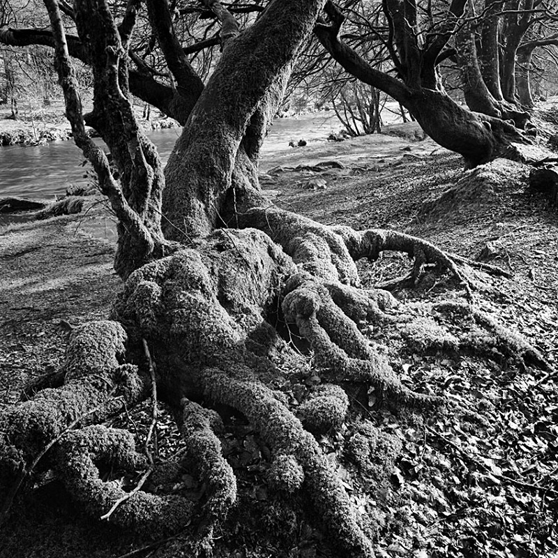 0788 - Exmoor Roots - Trees & Plants