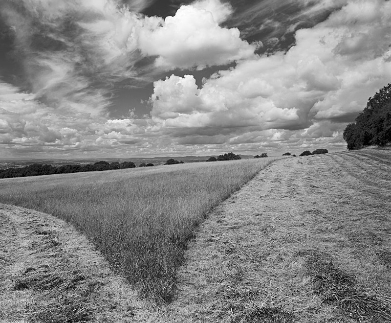 2166 - Hay Meadow - The Cotswold Way
