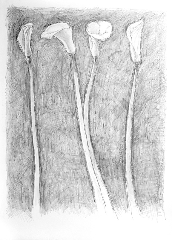 Four Lilies Standing 20in x30in - Flower Drawings