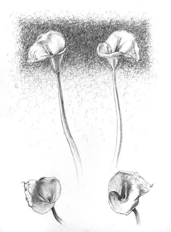 Composition with four lilies 20in x 30in - Flower Drawings