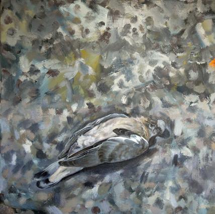 Pigeon 18in x18in Oil - Bird Paintings