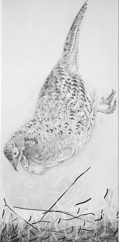_DSC0070pheasant 2 - Bird drawings
