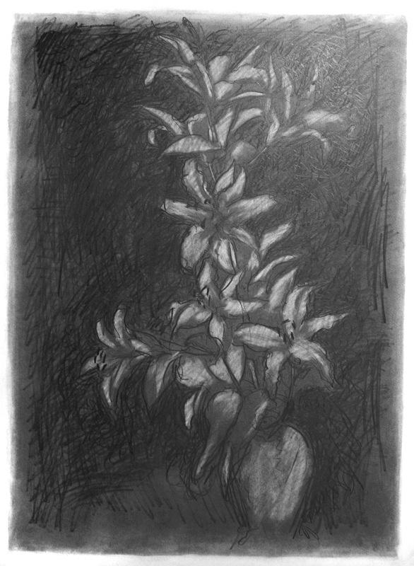 Dark Drawing 20in x 30in - Flower Drawings