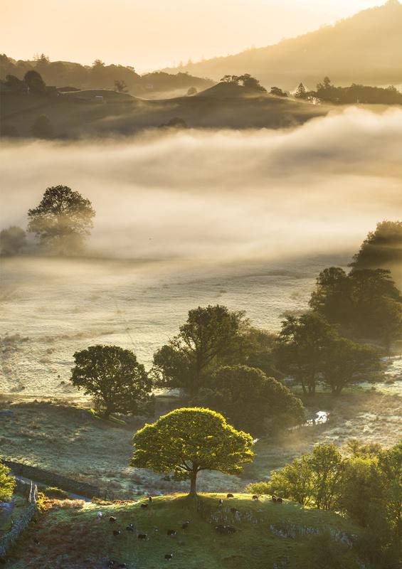 Little tree Little Langdale - Lake District & Cumbria