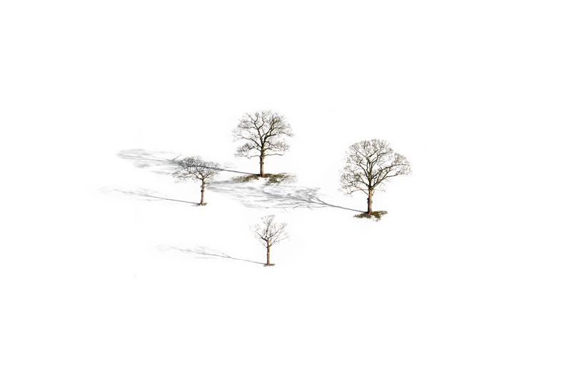 Four Trees, Peak District - Peak District & surrounding area