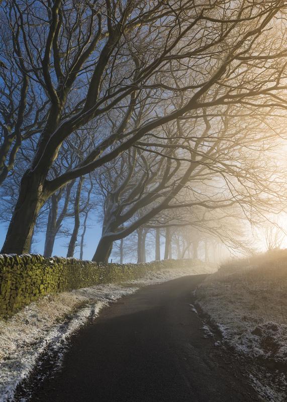 Trees on a Lane - Peak District & surrounding area