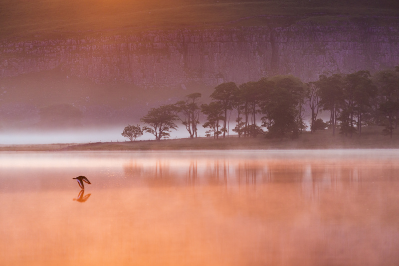 The Oystercatcher - Yorkshire Dales & Yorkshire
