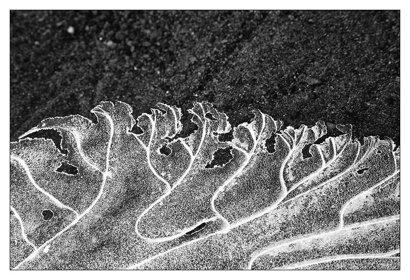 Natures Wonders - Monochrome Images