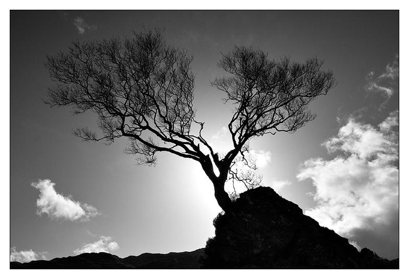 Silhouette of Life - Monochrome Images