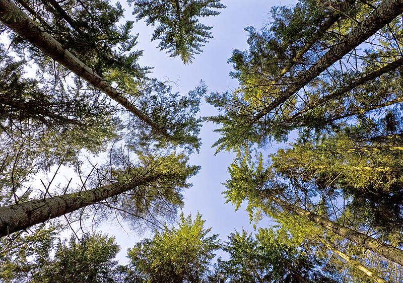 Into Achray Forest - Inland Scotland