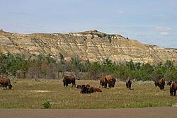 North Dakota Badlands portfolio