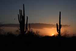 Tuscon, Arizona portfolio