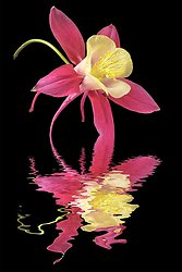 Flooded Flowers portfolio