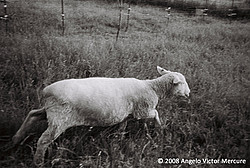 Farm Animals portfolio