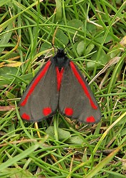 Butterflies & Moths portfolio