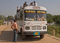 Indian Tiger Safari Tour 08 portfolio