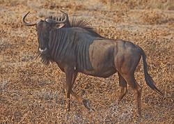 African Safari Tour 09 Zambia, Botswana,Namibia & South Africa portfolio