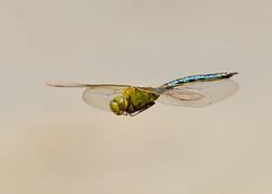 Insects etc portfolio