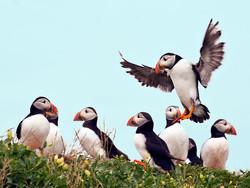 Birds . portfolio