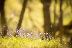 Woodlands portfolio