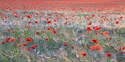 Flowers portfolio