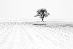 Trees portfolio